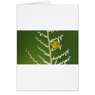A Male Pine Warbler Perched on an Icy Branch Card
