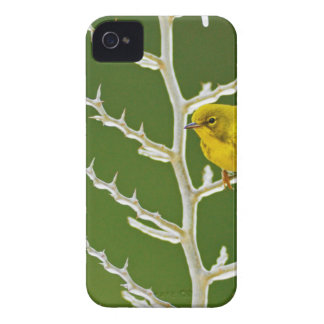 A Male Pine Warbler Perched on an Icy Branch iPhone 4 Case