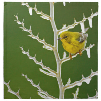 A Male Pine Warbler Perched on an Icy Branch Napkin