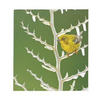 A Male Pine Warbler Perched on an Icy Branch Notepad
