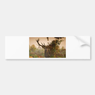 A Male Red Deer Blends in London's Richmond Park. Bumper Sticker