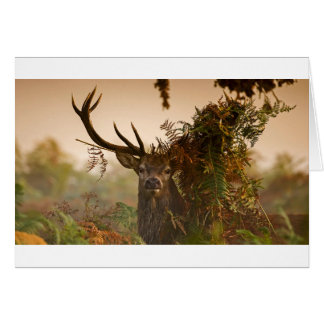 A Male Red Deer Blends in London's Richmond Park. Card