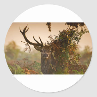 A Male Red Deer Blends in London's Richmond Park. Classic Round Sticker
