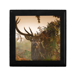 A Male Red Deer Blends in London's Richmond Park. Gift Box