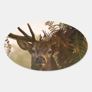 A Male Red Deer Blends in London's Richmond Park. Oval Sticker