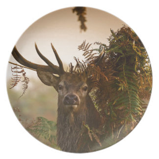 A Male Red Deer Blends in London's Richmond Park. Plate
