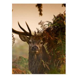 A Male Red Deer Blends in London's Richmond Park. Postcard