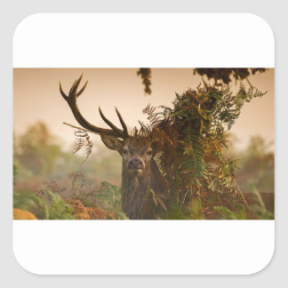 A Male Red Deer Blends in London's Richmond Park. Square Sticker