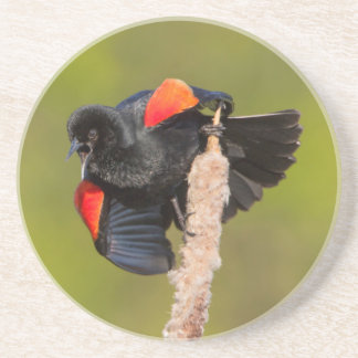 A Male Red-Winged Bird 2 Coaster