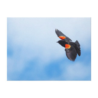 A Male Red-Winged Bird 2 Stretched Canvas Print