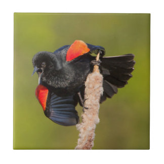 A Male Red-Winged Bird 2 Tiles