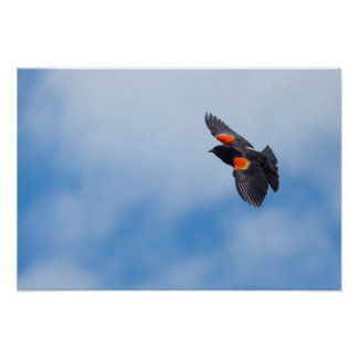 A Male Red-Winged Bird Poster