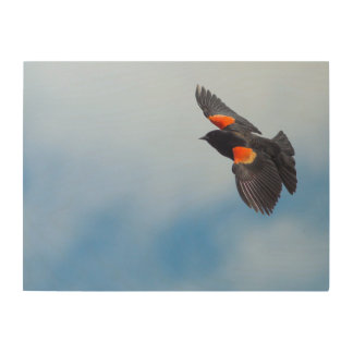 A Male Red-Winged Bird Wood Print