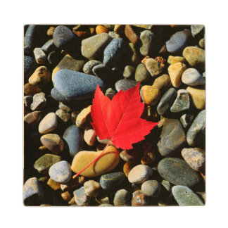 A Maple leaf on a Rock Background Maple Wood Coaster
