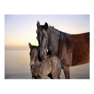 A mare and her baby foal postcard