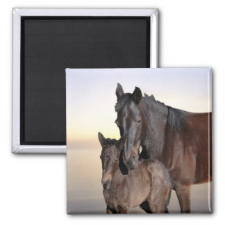 A mare and her baby foal square magnet