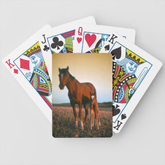 A mare and her foal bicycle playing cards