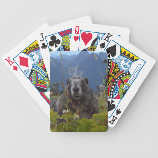 A marmot in Paradise in Mount Rainier National Par Poker Deck