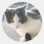 A Max And Mantle Bi Colour Cat Round Sticker