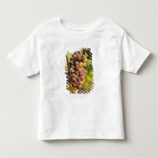 A moldy Semillon grape bunch at Ch Raymond Lafon Shirt