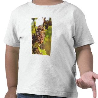 A moldy Semillon grape bunch at Ch Raymond Lafon T Shirt