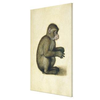 A Monkey Canvas Print
