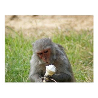 A monkey enjoying an ice cream cone postcard