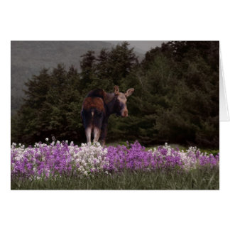 A Moose in the Phlox Card