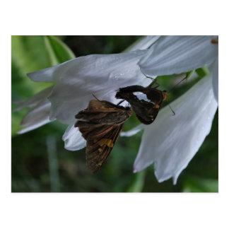 A Moth Date Postcard