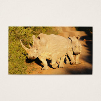 A Mother and Calf White Rhino in South Africa Business Card