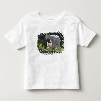 A mountain goat nanny nurses her kid in tee shirt