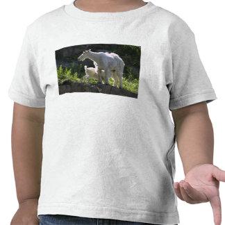 A mountain goat nanny nurses her kid in shirt