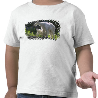 A mountain goat nanny nurses her kid in t shirts