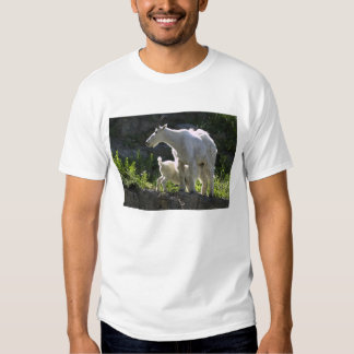 A mountain goat nanny nurses her kid in tshirts