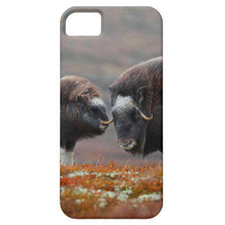 A Musk Ox and Calf iPhone 5 Case