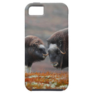 A Musk Ox and Calf iPhone 5 Cover