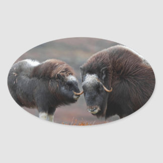 A Musk Ox and Calf Oval Sticker
