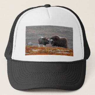 A Musk Ox and Calf Trucker Hat