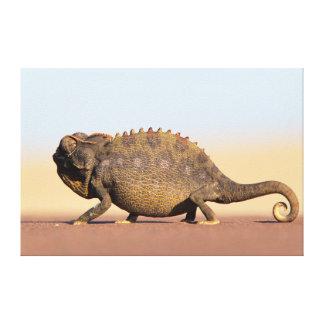 A Namaqua Chameleon walking across a sandy plain Stretched Canvas Print
