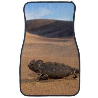 A Namaqua Chameleon walking Auto Mat