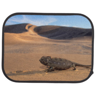 A Namaqua Chameleon walking Car Carpet