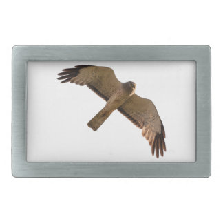 A Northern Harrier soars overhead Belt Buckles