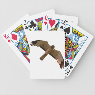 A Northern Harrier soars overhead Bicycle Playing Cards