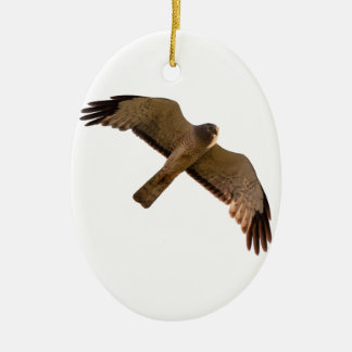 A Northern Harrier soars overhead Ceramic Oval Ornament