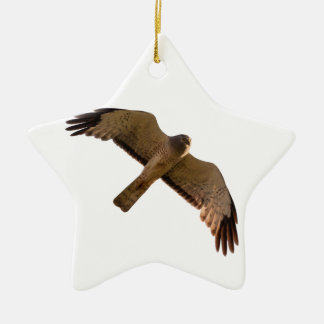 A Northern Harrier soars overhead Ceramic Star Ornament