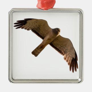 A Northern Harrier soars overhead Metal Ornament