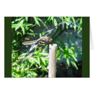 a notecard for the Dragonfly lover