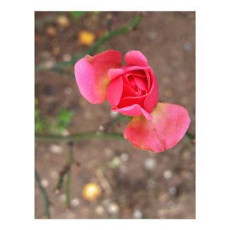 A November rosebud Letterhead Template
