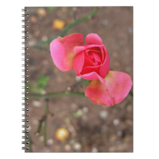 A November rosebud Note Books