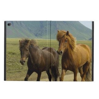 A Pair of Brown Icelandic Ponies